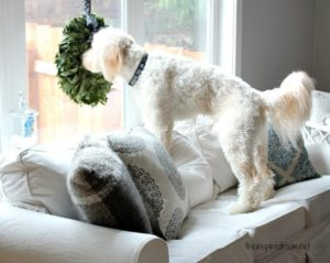 Pet Friendly Sofas Without Compromising Style